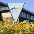 SWM-mit-Sonnenblumen